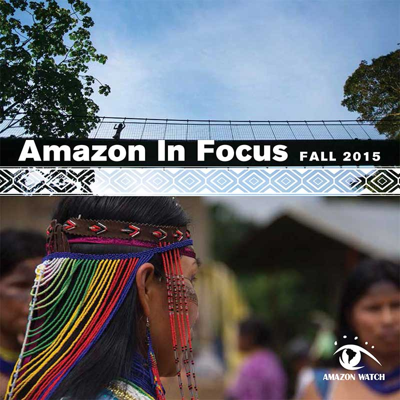 2015 Amazon in Focus