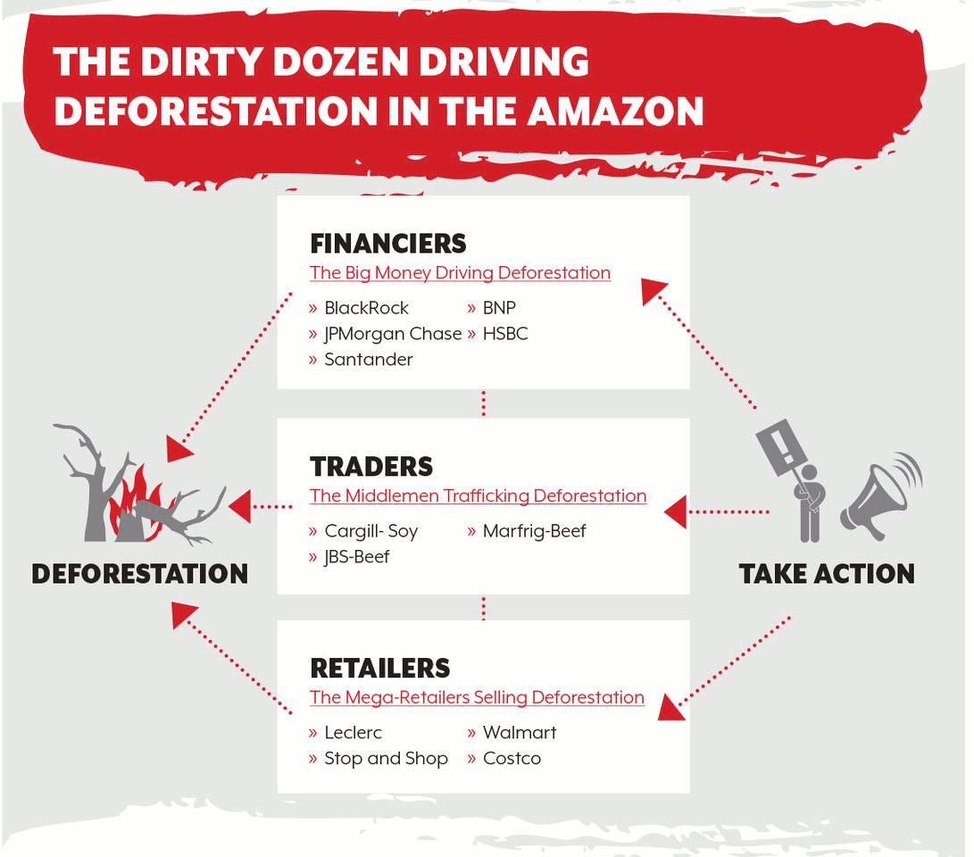 AMAZON WATCH » Dirty Dozen Companies Driving Deforestation