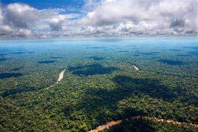 We are losing the world's tropical rainforest at an alarming rate, with major repercussions for the entire planet.