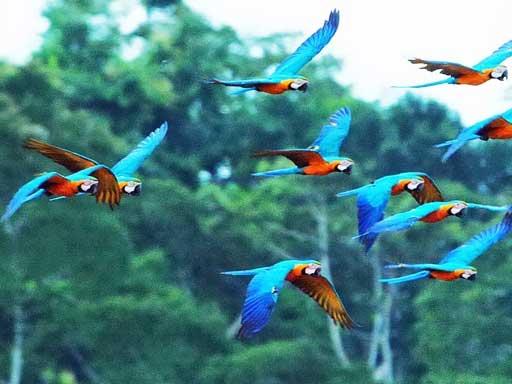 Amazon Watch 187 Ecuador Approves Yasuni National Park Oil