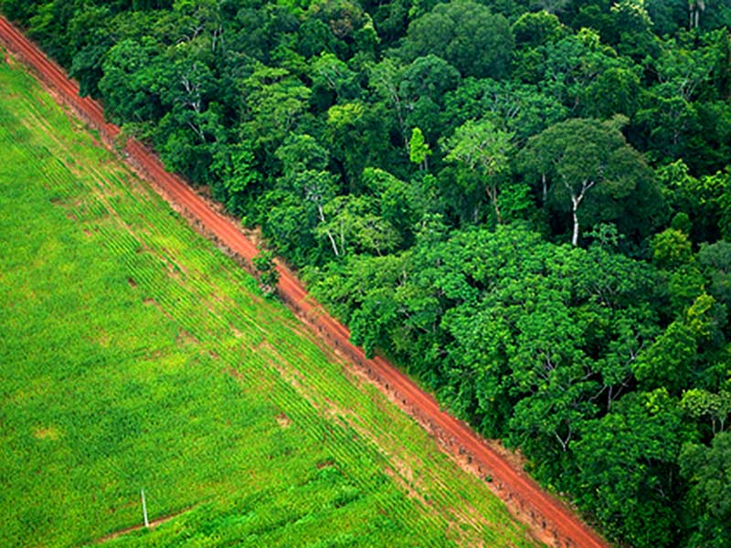 How to Stop Deforestation in the Amazon? Empower Indigenous Peoples
