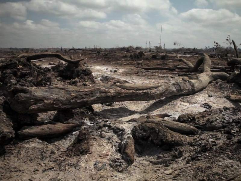 Belo Monte: Burning Legal Timber Stokes the Fires of Brazil's Illegal Lumber Market