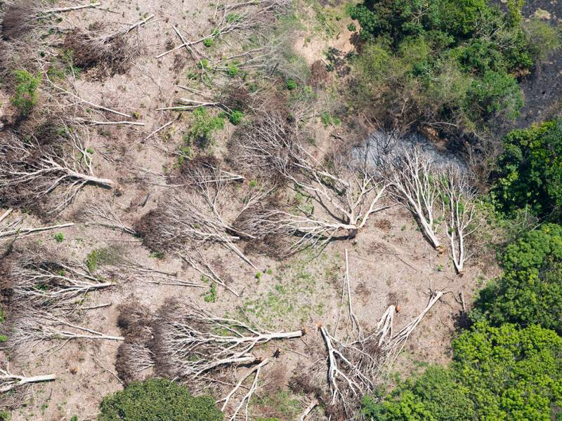 Business as Usual: A Resurgence of Deforestation in the Brazilian Amazon