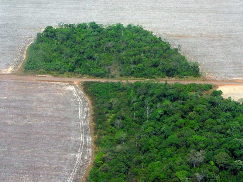 Brazil's Rollbacks Jeopardize the Amazon's Future