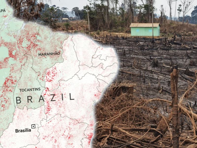 Rainforest Pays the Price for Brazil's Crisis