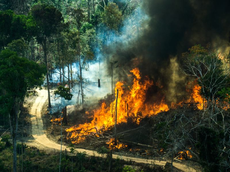 A forest fire extends over farms and forest in Cujubim, Rondônia state, in August 2016. The latest fires are dramatically worse than in previous years. Photo credit: Greenpeace