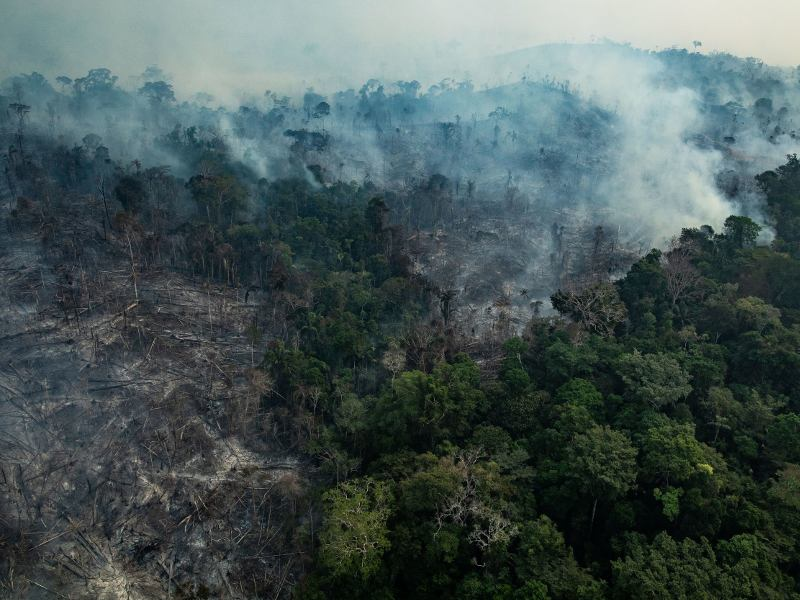 Australia and the Amazon: Two Terrible Tragedies With One Key Difference