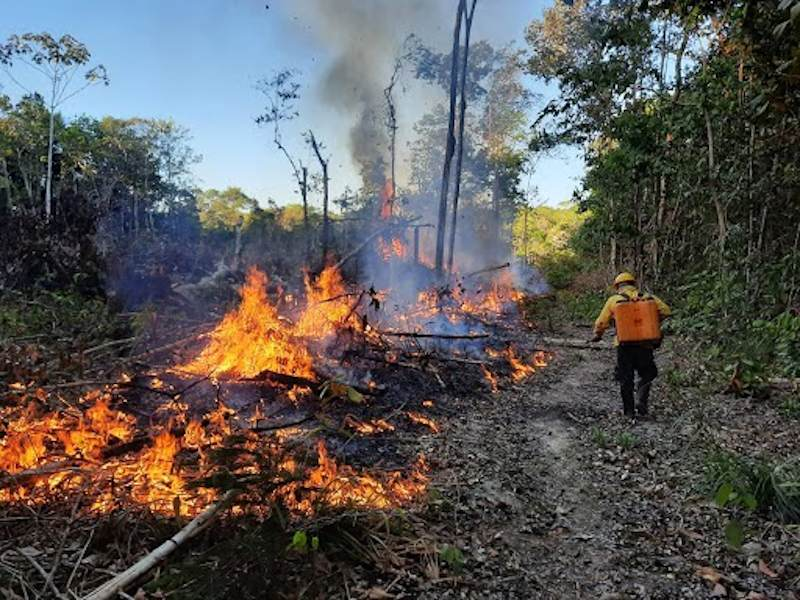 Amazon Fires Mapping: Exposing the Destruction with Data