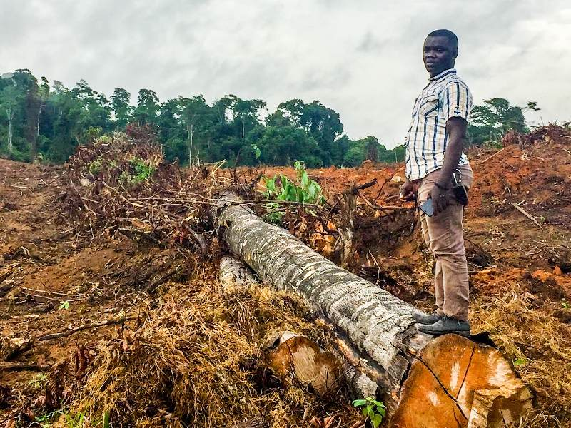Join Us for an Actionar to Defund Deforestation!