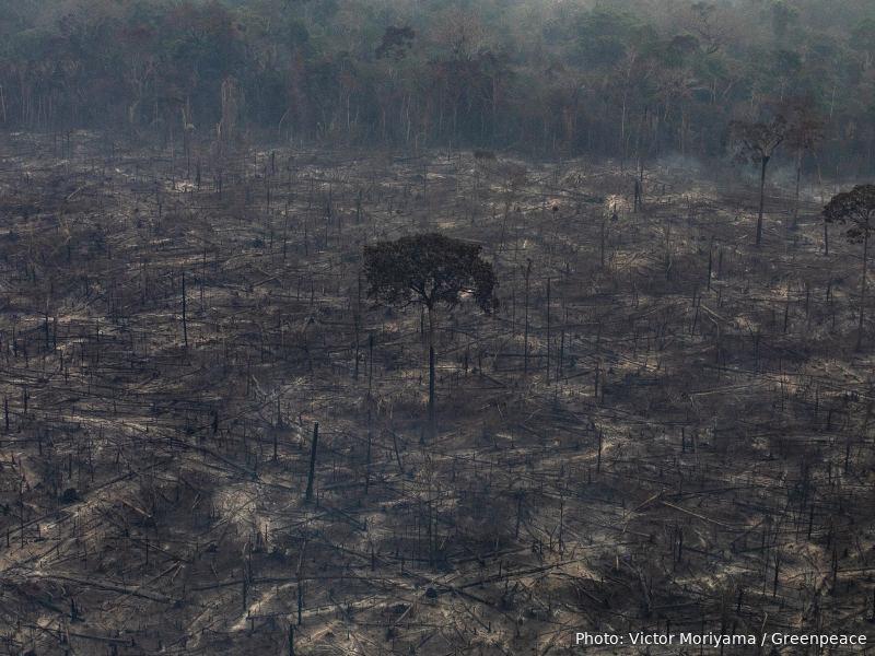 Photo Credit: Victor Moriyama / Greenpeace
