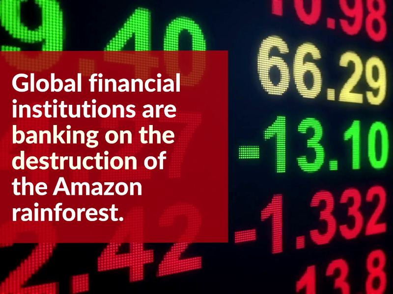 Demand an End to Banking on Amazon Destruction!