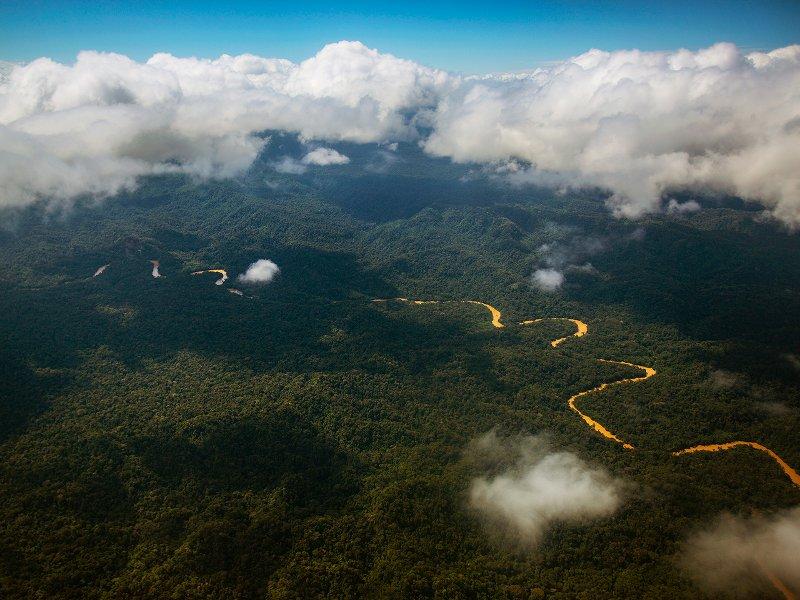 Pledge to Protect the Amazon Rainforest