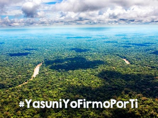 Join the Call to Save Yasuní, the Last Wonder of the Amazon!