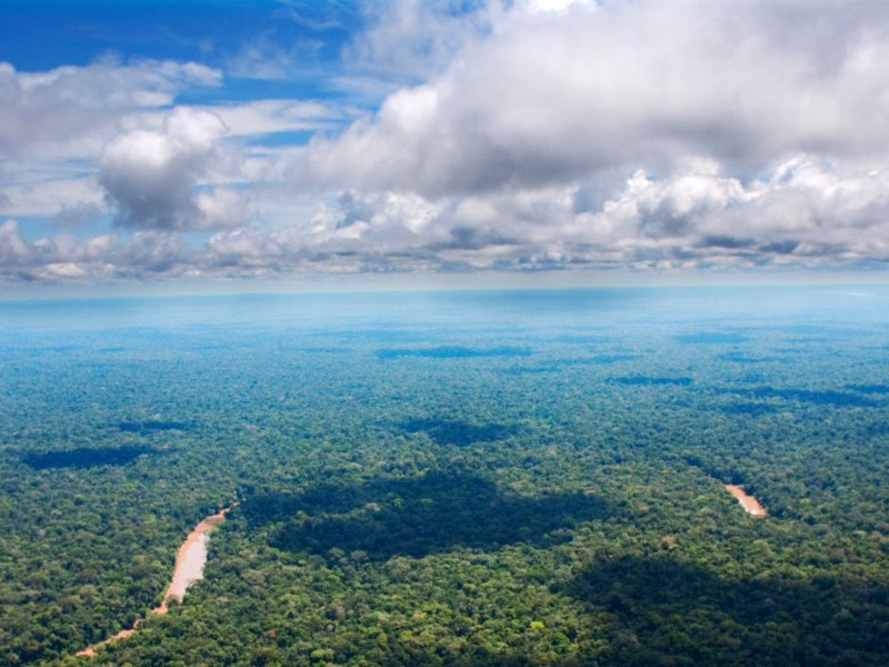 Stop the Destruction of the Ecuadorian Amazon