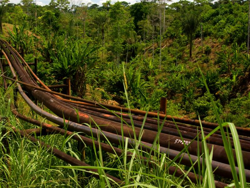 Urge Ecuador's New Oil-Friendly Environmental Minister to Reject Yasuní Oil Drilling!